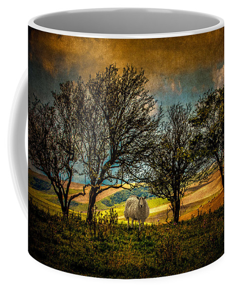 Sheep Coffee Mug featuring the photograph Up On The Sussex Downs In Autumn by Chris Lord