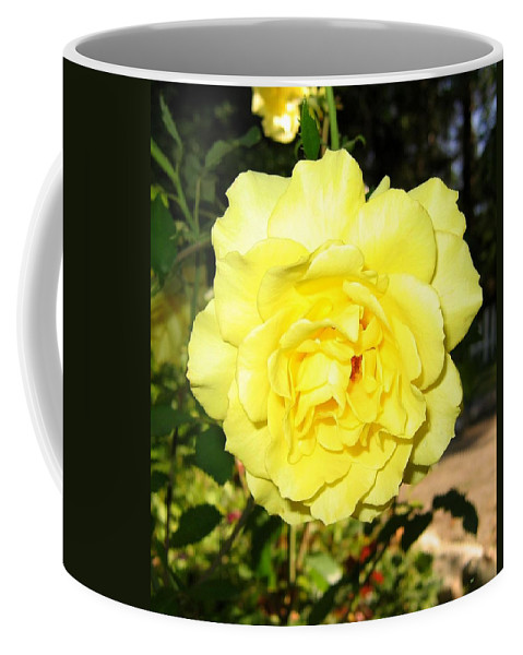 Upbeat Yellow Rose Coffee Mug featuring the photograph Upbeat Yellow Rose by Will Borden