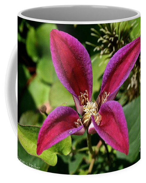 Outdoors Coffee Mug featuring the photograph Vibrant Star by Susan Herber