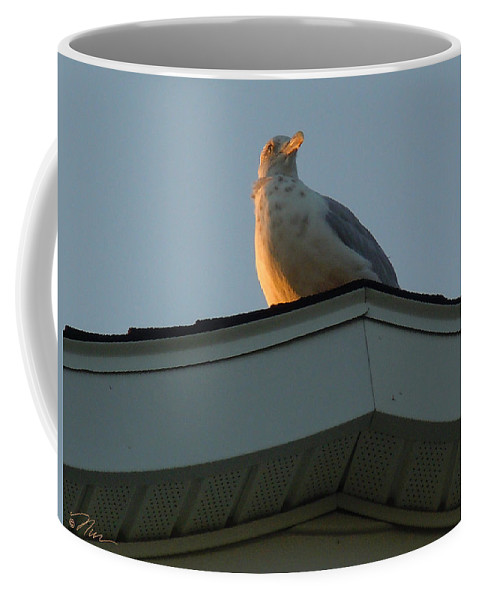 Bird Coffee Mug featuring the photograph View At Dusk by Nancy Griswold