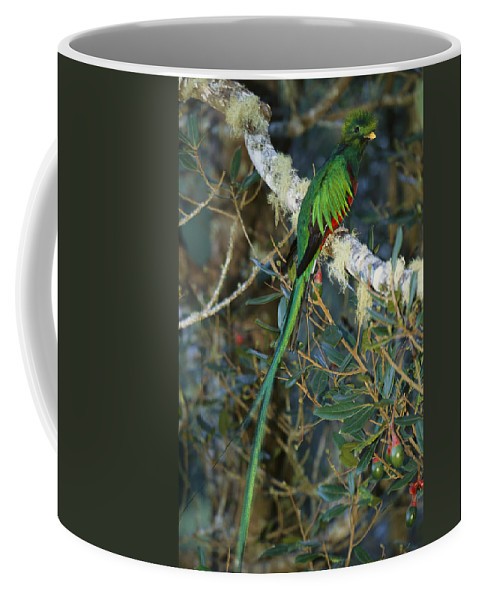 Animals Coffee Mug featuring the photograph View Of A Male Resplendent Quetzal by Roy Toft