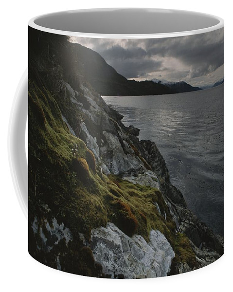 South America Coffee Mug featuring the photograph View Of The Mossy Shoreline Of Taraba by Gordon Wiltsie