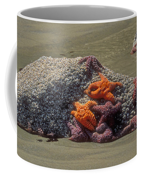 Starfish Marine Life Coffee Mug featuring the photograph Waiting For The Tide by Sandra Bronstein