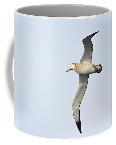 Wandering Albatross Coffee Mug featuring the photograph Wandering Albatross by Tony Beck