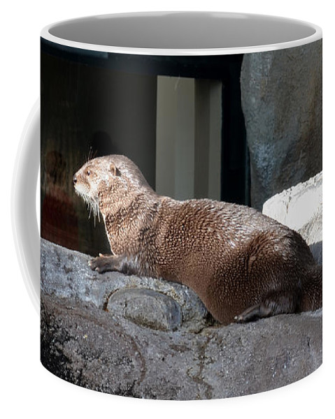 Animal Coffee Mug featuring the photograph Watching Everybody by Donna Brown