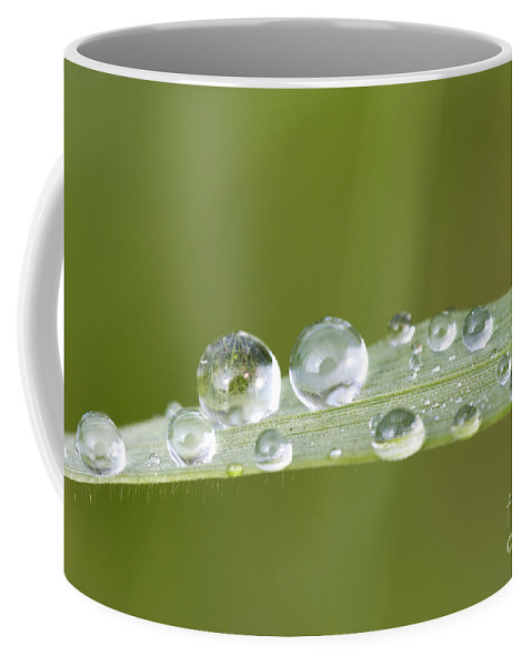 Grass Coffee Mug featuring the photograph Water Drop On Blade Grass by Michal Boubin