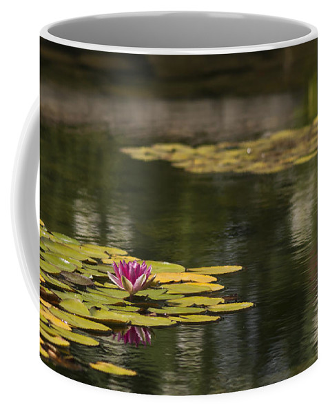 Flowers Coffee Mug featuring the photograph Water Lilies And Lily Pads by Pam Holdsworth