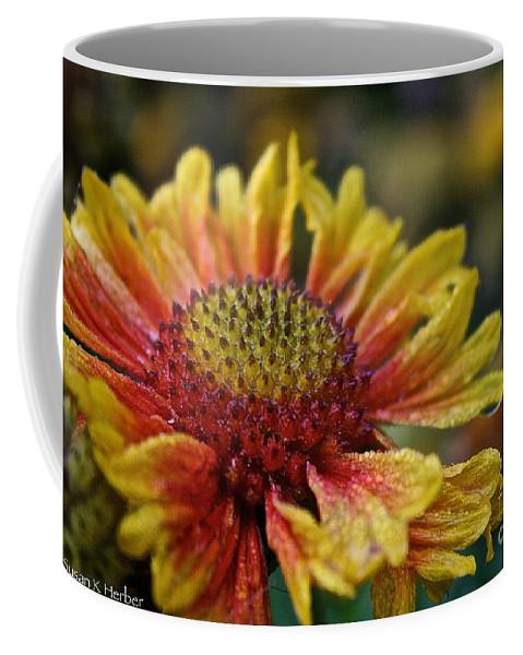Flower Coffee Mug featuring the photograph Waterlogged Arizona Apricot by Susan Herber