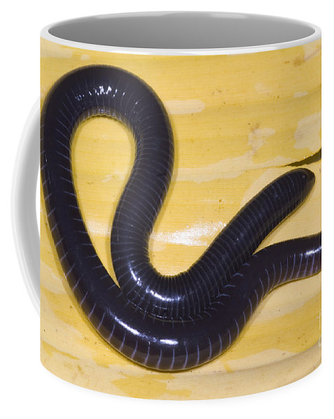 Geotrypetes Seraphini Coffee Mug featuring the photograph West African Caecilian by Dante Fenolio