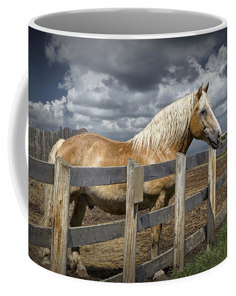 Art Coffee Mug featuring the photograph Western Palomino Horse In Alberta Canada No.1335 by Randall Nyhof