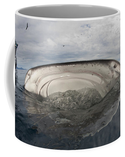 Front View Coffee Mug featuring the photograph Whale Shark Feeding By Fishing by Steve Jones