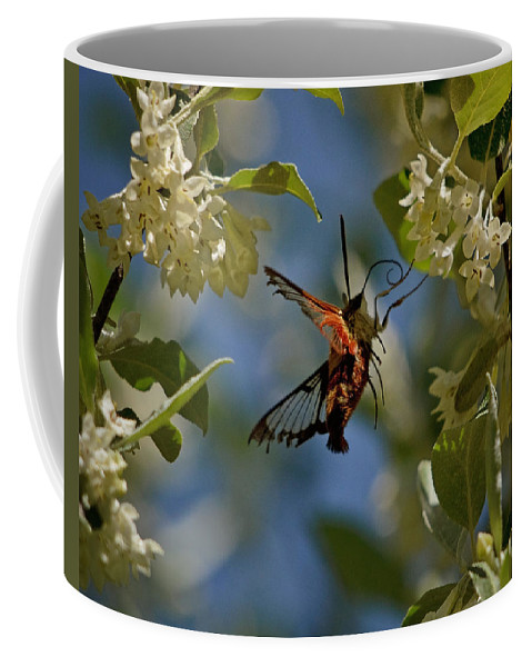 Hummingbird Moth Coffee Mug featuring the photograph What Dreams Are Made Of by Susan Capuano