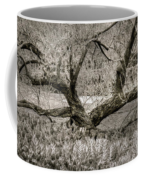 Tree Coffee Mug featuring the photograph Whisper by Debbi Granruth
