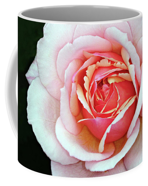 Rose Coffee Mug featuring the photograph White And Pink by Dave Mills