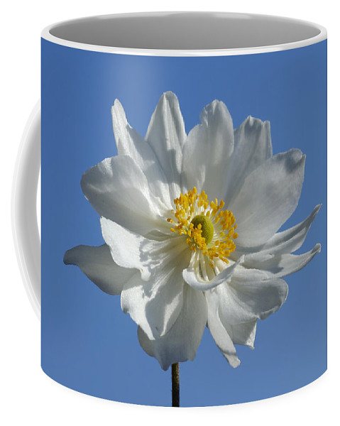 Anemone Coffee Mug featuring the photograph White Anemone Blue Sky by Matthias Hauser