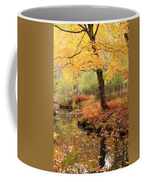 White Ash Coffee Mug featuring the photograph White Ash And Stream In Autumn by Roupen Baker
