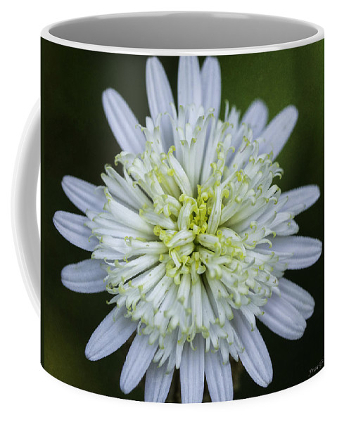 Flower Coffee Mug featuring the photograph White Aster by Fran Gallogly