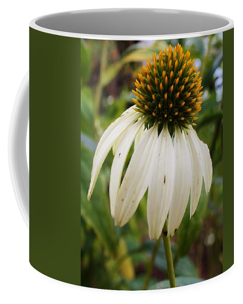 Flora Coffee Mug featuring the photograph White Coneflower by Bruce Bley