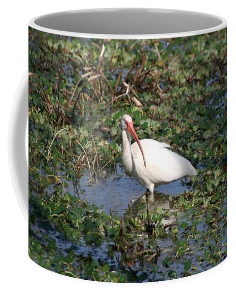 Crane Coffee Mug featuring the photograph White Crane by Ian Mcadie
