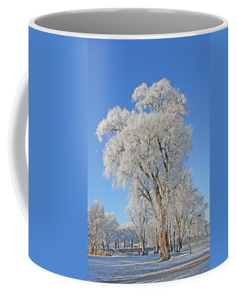 White Coffee Mug featuring the photograph White Frost Tree by Ralf Kaiser