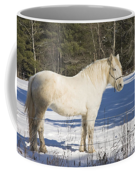 Equine Coffee Mug featuring the photograph White Horse In Winter Maine by Keith Webber Jr