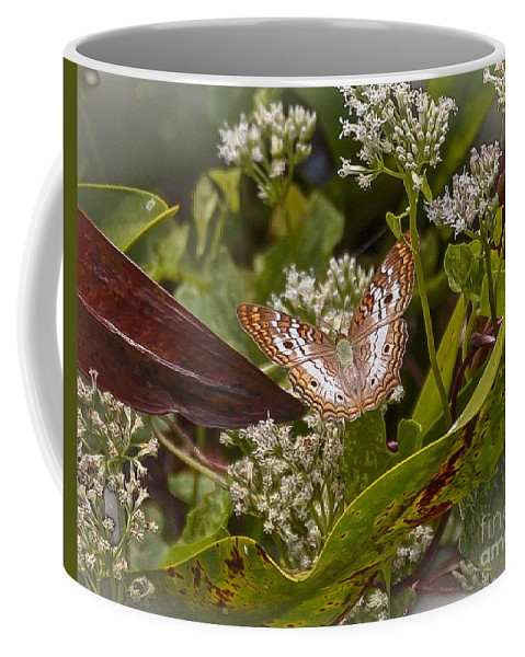 Butterfly Coffee Mug featuring the photograph White Peacock Butterfly by Carol Bradley