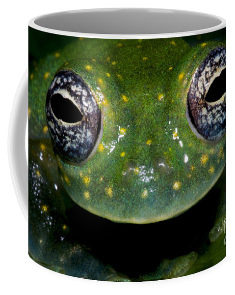 Animal Coffee Mug featuring the photograph White Spotted Glass Frog by Dante Fenolio