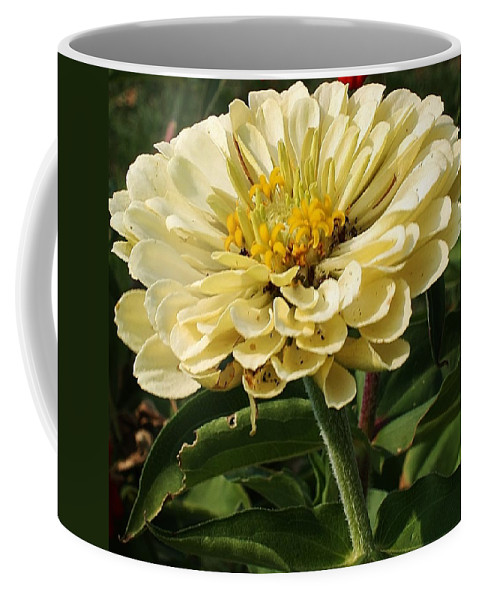 Flora Coffee Mug featuring the photograph White Zinnia by Bruce Bley
