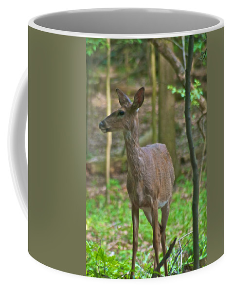 Animal Coffee Mug featuring the photograph Whitetail 7338 by Michael Peychich
