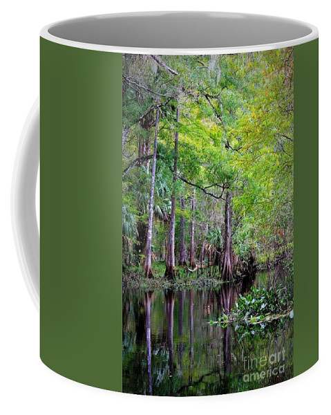 Cypress Trees Coffee Mug featuring the photograph Wild Florida - Hillsborough River by Carol Groenen