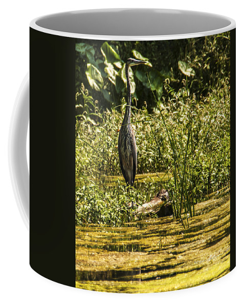 Wildlife Coffee Mug featuring the photograph Wild Still Life by Edward Peterson