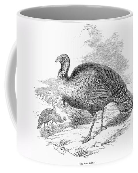 1853 Coffee Mug featuring the photograph Wild Turkey, 1853 by Granger