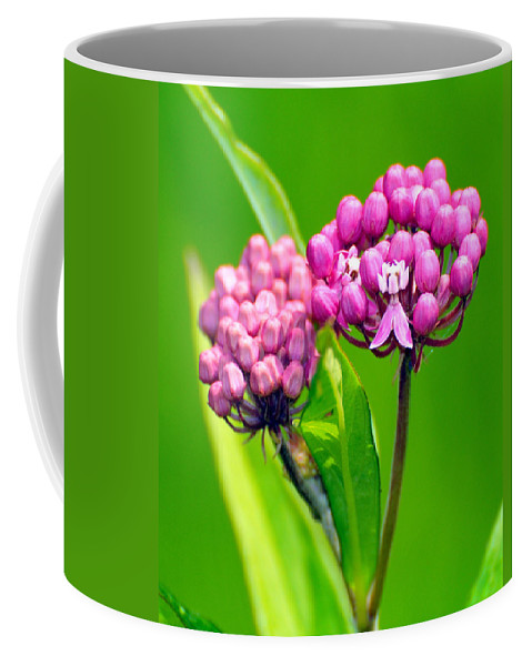 Wildflower Coffee Mug featuring the photograph Wildflower by Paul Ward