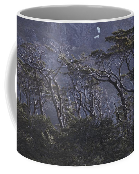 South America Coffee Mug featuring the photograph Wind-sculpted Southern Beech Forest by Gordon Wiltsie