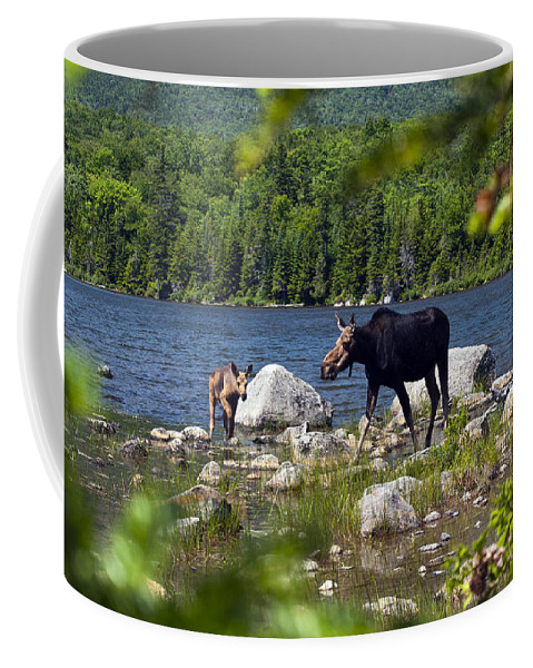 Moose Coffee Mug featuring the photograph Window To The Moose by Glenn Gordon