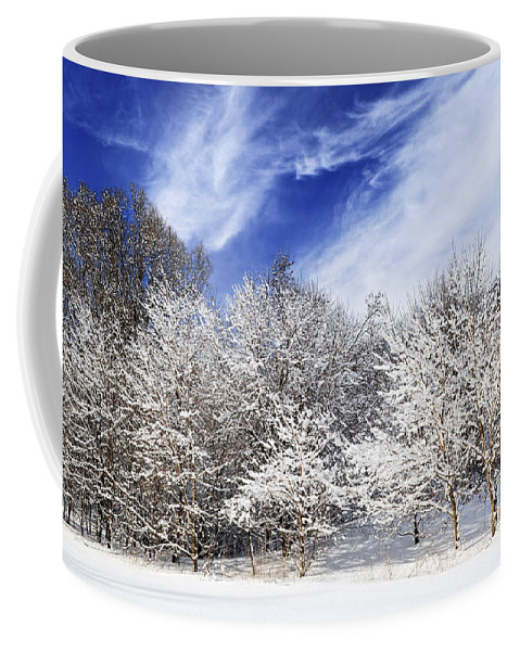 Winter Coffee Mug featuring the photograph Winter Forest Covered With Snow by Elena Elisseeva