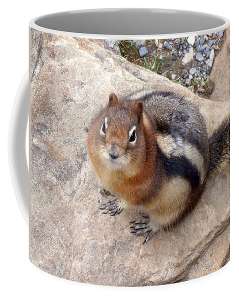 Squirrel Coffee Mug featuring the photograph Winter Weight by Ian Mcadie