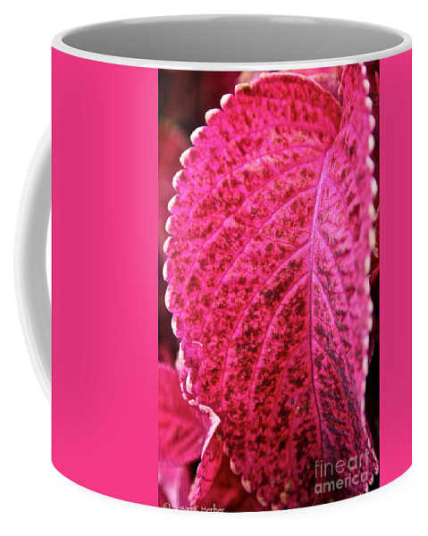Plant Coffee Mug featuring the photograph Wizard Velvet Coleus by Susan Herber