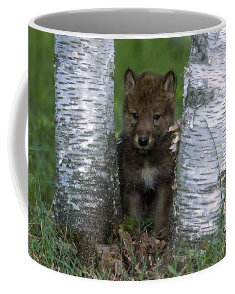 Wolves Coffee Mug featuring the photograph Wolf Pup Playing Peekaboo by Sandra Bronstein