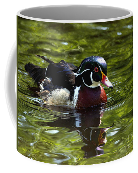 Wood Duck Coffee Mug featuring the photograph Wood Duck by Sharon Talson