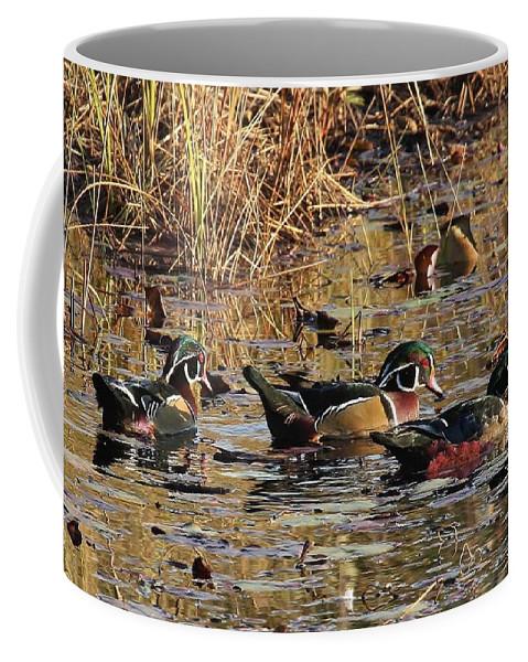 Wood Ducks Coffee Mug featuring the photograph Wood Duck Trio by Teresa McGill