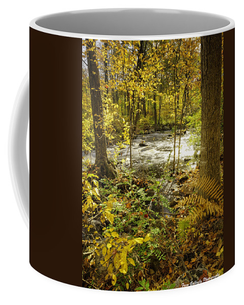 Landscape Coffee Mug featuring the photograph Woodland Scene by Fran Gallogly