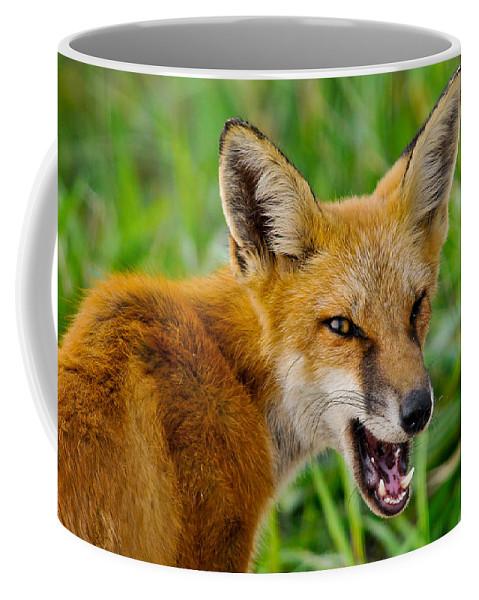 Birds Coffee Mug featuring the photograph Yaaaaar by Craig Leaper