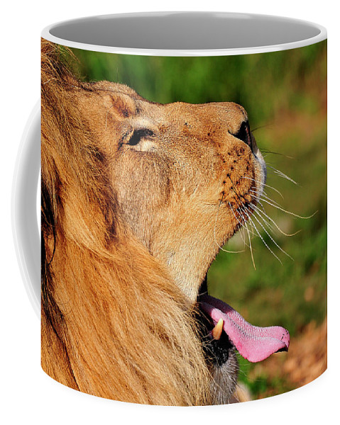 Afican Coffee Mug featuring the photograph Yawning by Bill Dodsworth