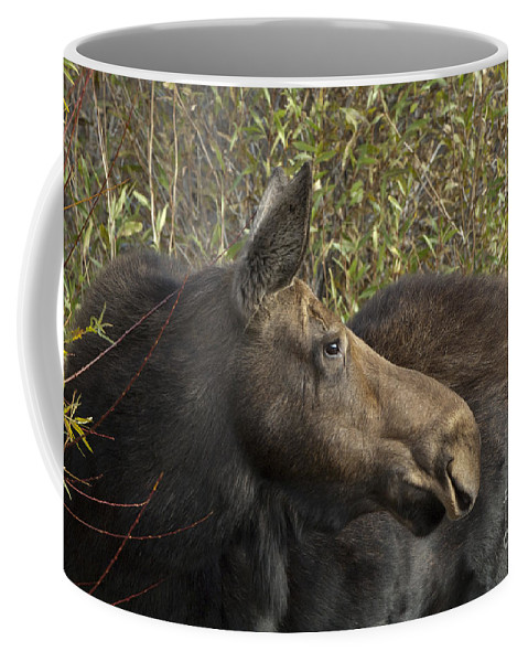 Animals Coffee Mug featuring the photograph Yearling Calf On Alert by Sandra Bronstein