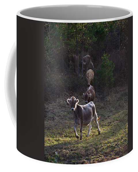 Yearling Coffee Mug featuring the photograph Yearling On The Run by Douglas Barnett