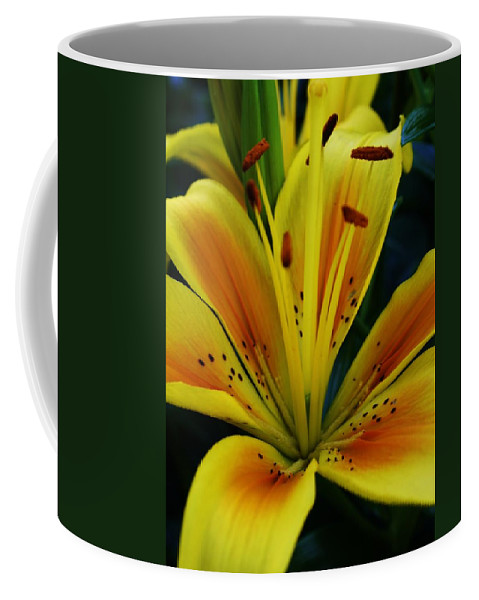 Flora Coffee Mug featuring the photograph Yellow Asiatic Lily by Bruce Bley