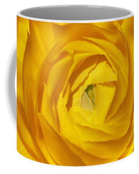 Bronstein Coffee Mug featuring the photograph Yellow Beauty by Sandra Bronstein