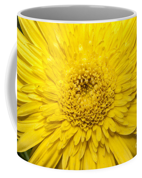 Yellow Coffee Mug featuring the photograph Yellow Burst by Darleen Stry