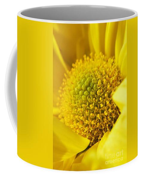 Yhun Suarez Coffee Mug featuring the photograph Yellow Chrysanthemum by Yhun Suarez
